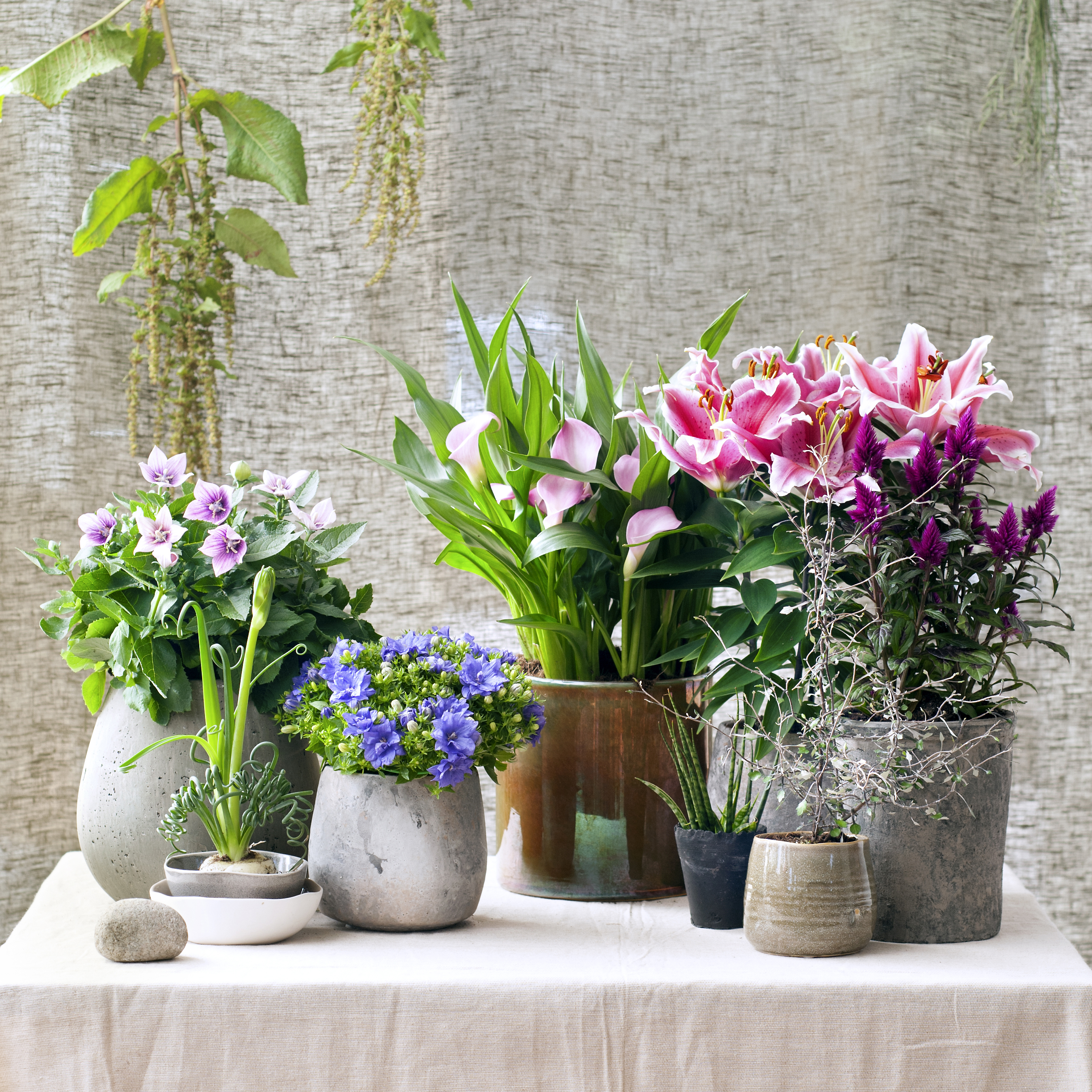 In and out Houseplants
